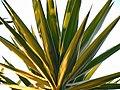 (1)Cactus 007.jpg