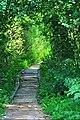 ^footpath - panoramio.jpg