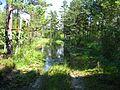 Ādažu novads, Latvia - panoramio (2).jpg