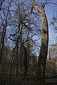 Ботанічний сад Національного аграрного університету 06.jpg