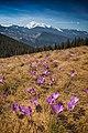 Весна на полонині.jpg