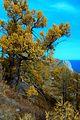 Восточный берег Ольхона. - panoramio.jpg