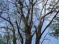 Дендрологічний парк 236.jpg