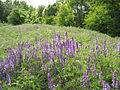 Донецкий ботанический сад 022.jpg