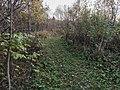Дорога вдоль Гайвы 32.jpg