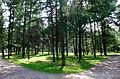 Дорожки в парке.JPG
