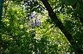 Дубовий гай з природною водоймою в Києві. Фото 1.jpg
