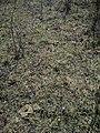 Квіткова поляна, заказник Острів, с. Веселий Поділ.jpg