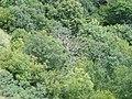 Лес на склонах Маркотхского хребта - panoramio.jpg