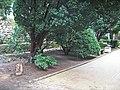 Парк.Тиса - panoramio.jpg