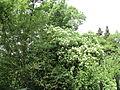 Парк шума Гази Баба во мај (13).JPG