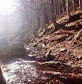 По пътя за хижа Хубавец, резерват Стара река... 26.jpg