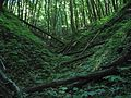 Під пологом лісу.jpg