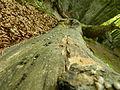Скелі Довбуша 001.JPG