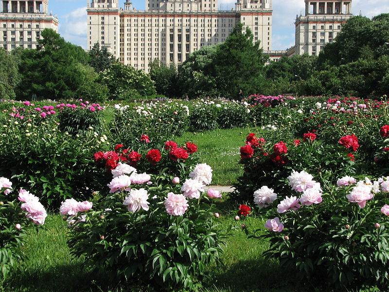 File:Сollection of peonies 11.JPG