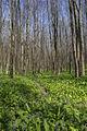 Холодноярський ліс.jpg