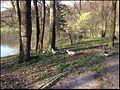 Царицино 9 мая 2013 - panoramio (11).jpg