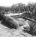בריכת נוי בגן הציבורי בטבריה-JNF014276.jpeg