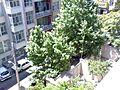 درخت از بالا - panoramio.jpg