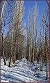 کوچه ی درختی - panoramio.jpg