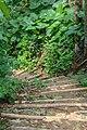 লাউয়াছড়ার ভিতরের রাস্তা.jpg