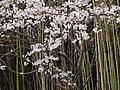 「リバーパークおおよど」にて 2013.4.01 - panoramio (1).jpg