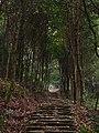 南洋村古道 - Nanyang Village Trail - 2014.01 - panoramio (1).jpg