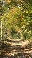 昔ながらの里山の林道 - panoramio.jpg