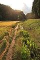 水田, Suiden (Paddy field), Kodomo Nature Park - panoramio.jpg