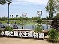 水郷佐原 水生植物園 (7431123226).jpg