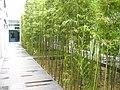 汕大图书馆顶的竹子 - panoramio.jpg