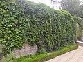 烟台山公园 02.jpg