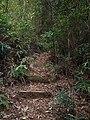 牛山溪登山道 - Niushanxi Mountain Trail - 2015.01 - panoramio (2).jpg