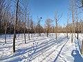 雪后的潍坊学院 2020-12-30 15.jpg