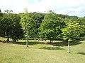 高森東公園 Takamori West Park - panoramio (2).jpg