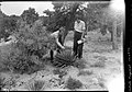 00771 Grand Canyon- McKee and Elzada Examine Plants 1938 (4739116129).jpg