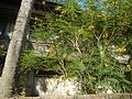 01155jfPoblacion Old Houses San Vicente San Miguel Bulacan Bulacanfvf 09.jpg