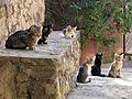 026 Gats al carrer de la Creu (Talamanca).JPG