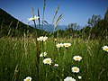 10 Turismo Emilia Romagna 8 giugno 2019 Parco dei laghi di Suviana e Brasimone, un ringraziamento speciale alle guide Eugenia e Walter.jpg