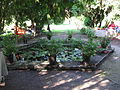17 Zámek Veltrusy, kuchyňská zahrada.jpg