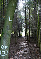 200910071144MEZ Limeswanderweg Wp 10-12 - Wp 10-13 5.jpg