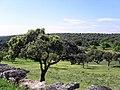 2010-05-01 Soto de Viñuelas - panoramio.jpg