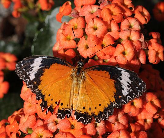 2011-04-25-lepidoptera-hunawihr-1.jpg