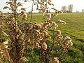 20111101Karl-Ludwig-See28.jpg