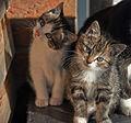 20131203 kittens B.jpg