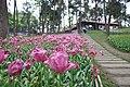 2014-04-04 石象湖 郁金香 liuzusai - panoramio (15).jpg