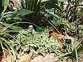 2015-05-27 Paris, Jardin des plantes 50.jpg