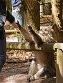 2016-04-21 13-37-54 montagne-des-singes.jpg