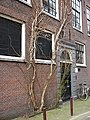 2016.03 - Amsterdam photo of climbing shrub on a house front in the city, Jordaan district; geo-tagged free urban picture, in public domain Commons; Dutch photography, Fons Heijnsbroek, The Netherlands (25411427103).jpg