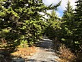 2019-10-27 12 08 34 View northeast along the Whispering Spruce Trail within a Red Spruce grove just southeast of Spruce Knob in Pendleton County, West Virginia.jpg